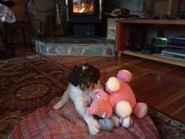 Jasper with pink elephant